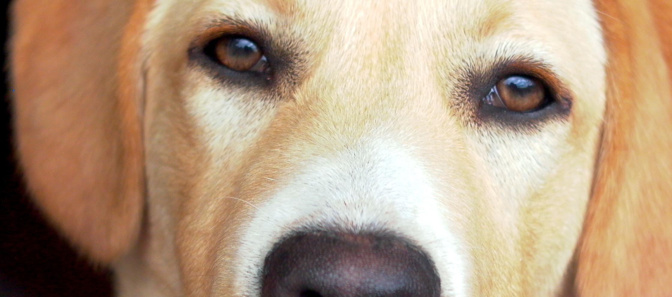 dog-1482113-e1442451346568